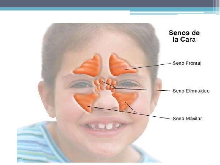 IRRIGACION<br /><ul><li> La irrigación procede de 5 fuentes:</li></ul> Arteria etmoidal anterior (oftálmica).<br /> Arteri...