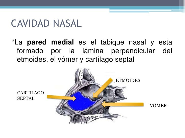 Pared medial: tabique nasal.