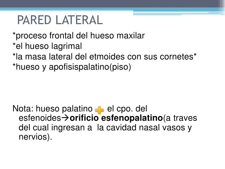 Pared lateral: tres láminas óseas y cornetes nasales.  </li></li></ul><li>CAVIDAD NASAL<br /><ul><li>Dividida por el tabi...