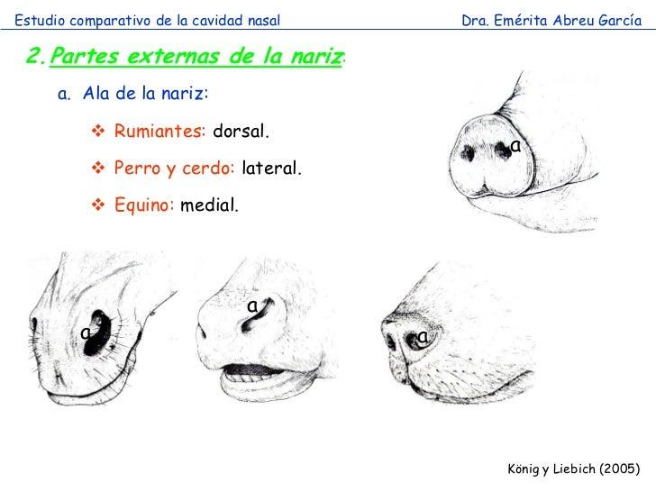 Cavidad nasal comparada