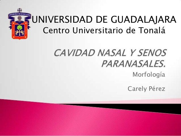 UNIVERSIDAD DE GUADALAJARA Centro Universitario de Tonalá                      Morfología                     Carely Pérez