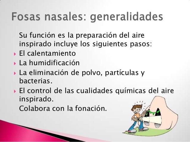 Cavidad nasal y senos paranasales Slide 3