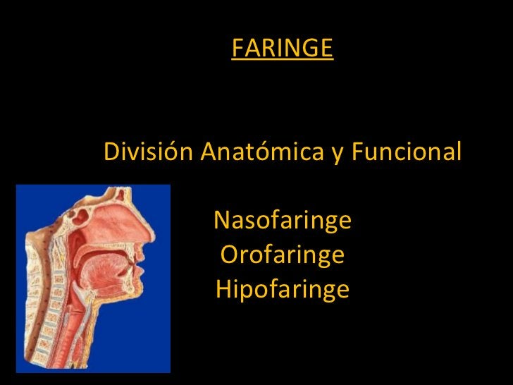 FARINGE División Anatómica y Funcional Nasofaringe Orofaringe Hipofaringe