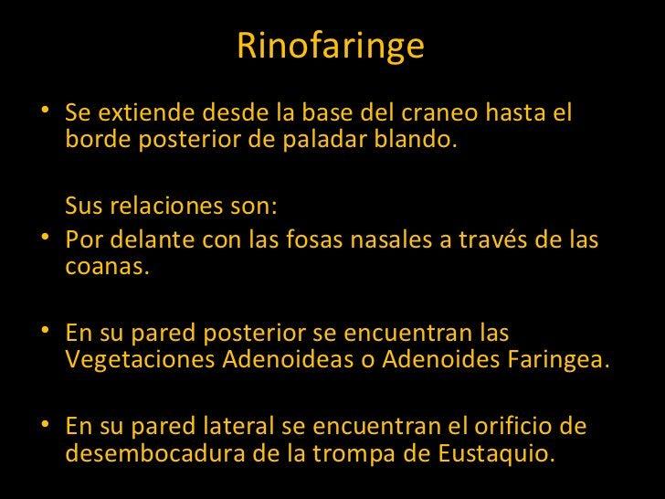 Rinofaringe <ul><li>Se extiende desde la base del craneo hasta el borde posterior de paladar blando.  </li></ul><ul><li>Su...