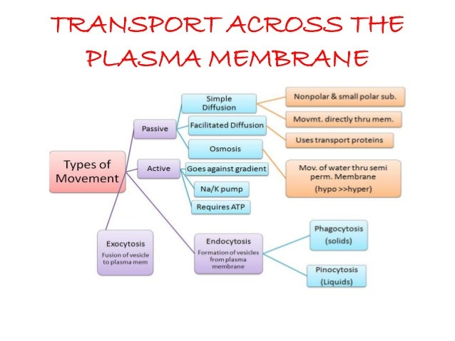 transport across membrane notes 2014 Is a transport protein that generates the voltage across a membrane transport solute across membrane by binding energy input note.