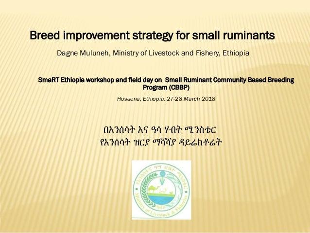 በእንሰሳት እና ዓሳ ሃብት ሚንስቴር የእንሰሳት ዝርያ ማሻሻያ ዳይሬክቶሬት SmaRT Ethiopia workshop and field day on Small Ruminant Community Based Bre...