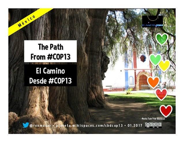 @ r o n m a d e r • p l a n e t a . w i k i s p a c e s . c o m / c b d c o p 1 3 • 0 1 . 2 0 1 7 Photo: Tule Tree (Oaxaca)