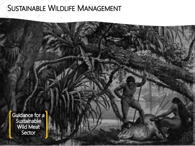 Guidance for a Sustainable Wild Meat Sector SUSTAINABLE WILDLIFE MANAGEMENT TheAmazonandMadeirarivers;sketchesanddescripti...