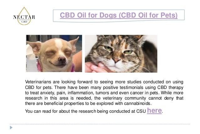 CBD Oil for Dogs (CBD Oil for Pets)