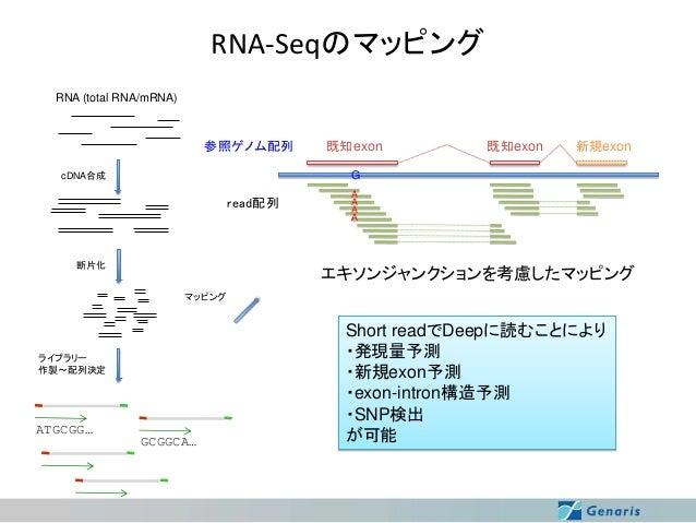 RNA-Seqのマッピング RNA (total RNA/mRNA)  参照ゲノム配列  既知exon  既知exon  新規exon  G  cDNA合成  read配列  断片化  A A A A  エキソンジャンクションを考慮したマッピン...