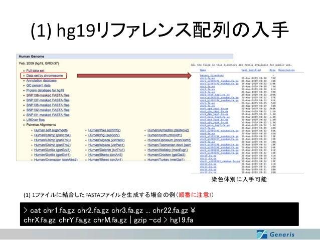 (1) hg19リファレンス配列の入手  染色体別に入手可能 (1) 1ファイルに結合したFASTAファイルを生成する場合の例(順番に注意!)  > cat chr1.fa.gz chr2.fa.gz chr3.fa.gz ... chr22....