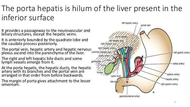 Porta Hepatis New Blog