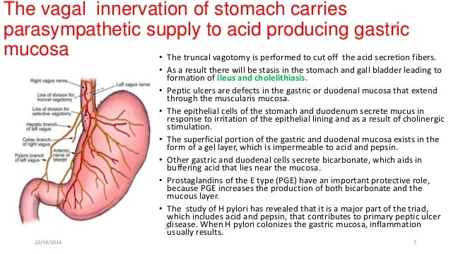 Cbl stomach duodenum hepatic group12182014 6 7 the vagal innervation of stomach ccuart Images