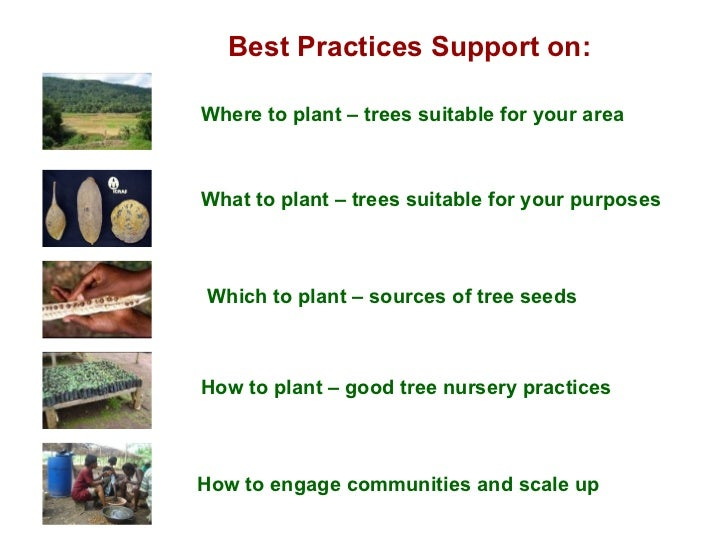 Best Practices Support on: Where to plant – trees suitable for your area Which to plant – sources of tree seeds How to pla...