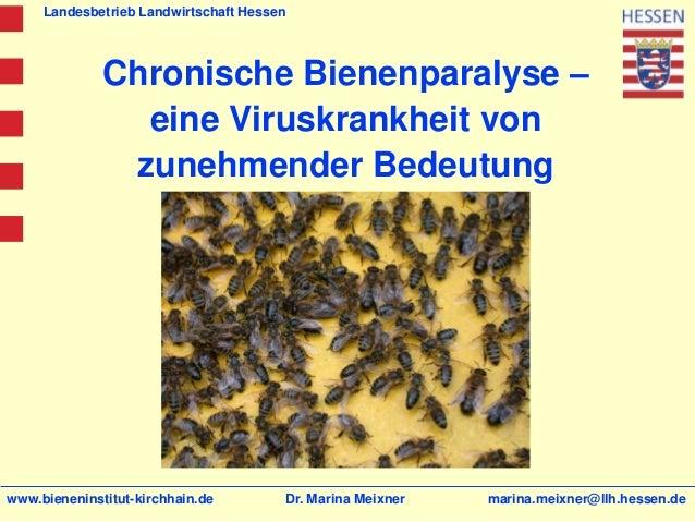 Landesbetrieb Landwirtschaft Hessen              Chronische Bienenparalyse –                eine Viruskrankheit von       ...