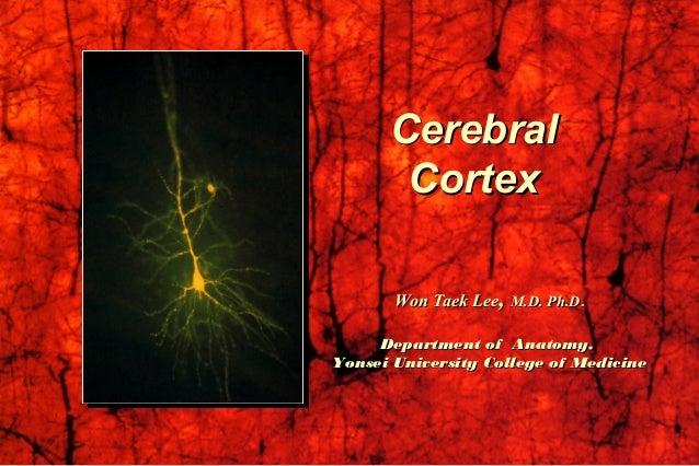 CerebralCerebral CortexCortex Won Taek LeeWon Taek Lee,, M.D. Ph.DM.D. Ph.D.. Department of Anatomy,Department of Anatomy,...