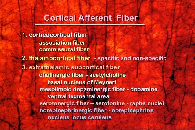 1. corticocortical fiber1. corticocortical fiber association fiberassociation fiber commissural fibercommissural fiber 2. ...