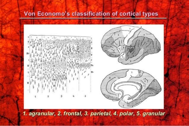 Von Economo's classification of cortical typesVon Economo's classification of cortical types 1. agranular, 2. frontal, 3. ...