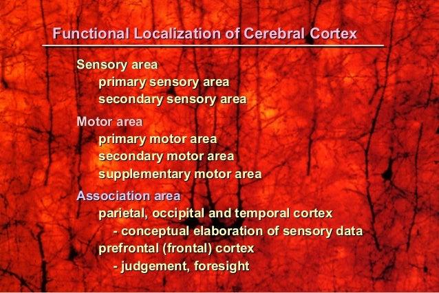 Sensory areaSensory area primary sensory areaprimary sensory area secondary sensory areasecondary sensory area Motor areaM...