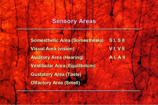 Somesthetic Area (Somesthesia)Somesthetic Area (Somesthesia) S I, S IIS I, S II Visual Area (vision)Visual Area (vision) V...