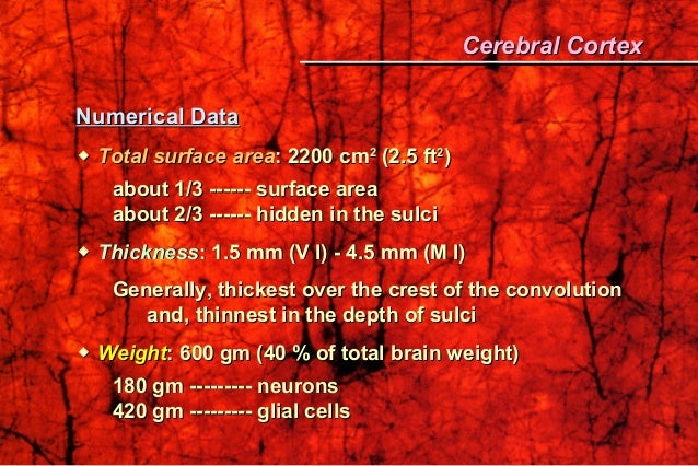 Numerical DataNumerical Data  Total surface areaTotal surface area: 2200 cm: 2200 cm22 (2.5 ft(2.5 ft22 )) about 1/3 ---...