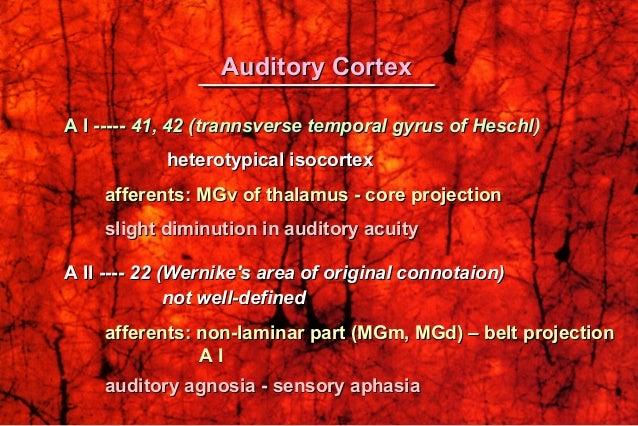 A I -----A I ----- 41, 42 (trannsverse temporal gyrus of Heschl)41, 42 (trannsverse temporal gyrus of Heschl) heterotypica...