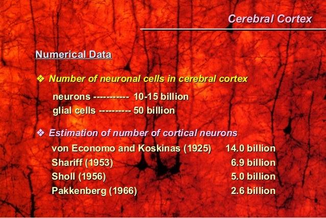 Numerical DataNumerical Data  Number of neuronal cells in cerebral cortexNumber of neuronal cells in cerebral cortex neu...