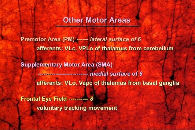 Brodman's Map of Motor and Sensory AreasBrodman's Map of Motor and Sensory Areas