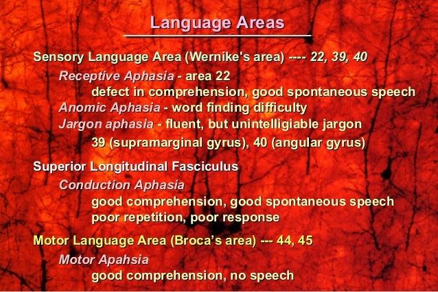 Language Areas (Geschwind Model)Language Areas (Geschwind Model)