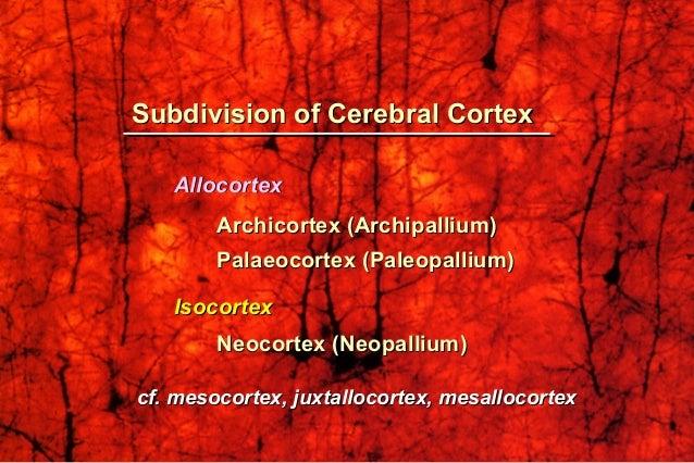 Subdivision of Cerebral CortexSubdivision of Cerebral Cortex AllocortexAllocortex Archicortex (Archipallium)Archicortex (A...