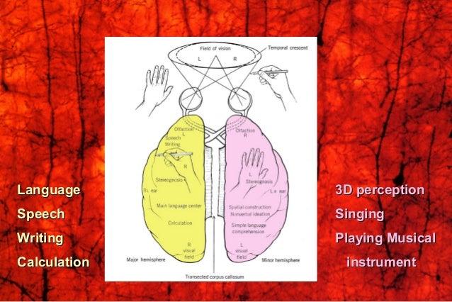Roger SperryRoger Sperry (1913-1994)(1913-1994) 1981 Nobel1981 Nobel LaureateLaureate Split BrainSplit Brain Commissuratom...