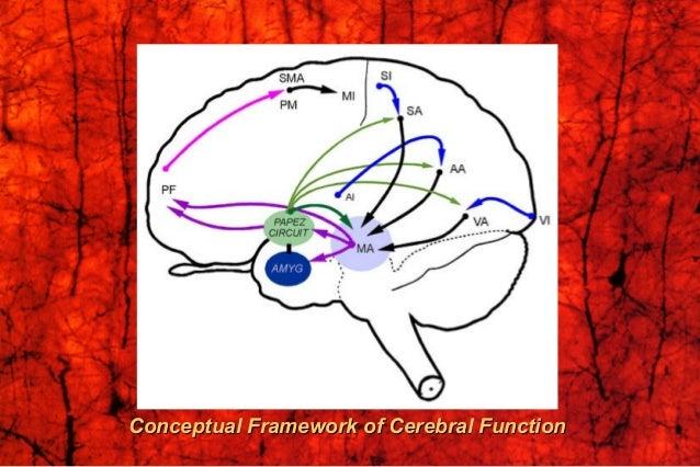 Cbr cortex