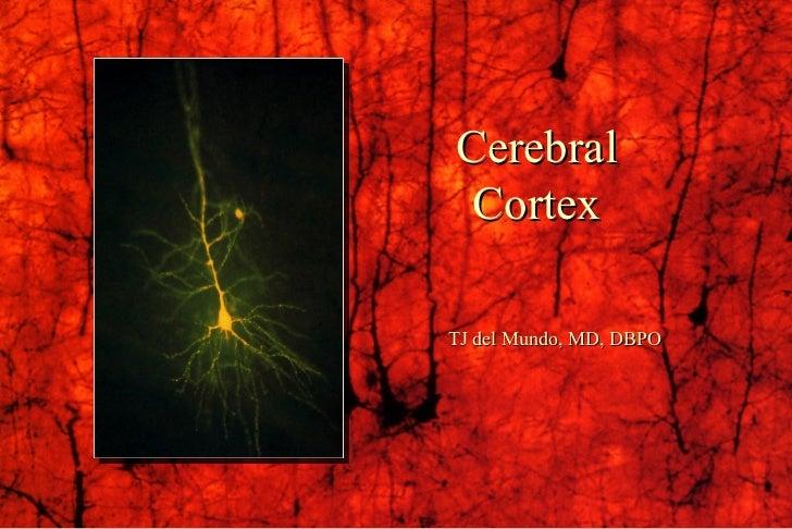 Cerebral Cortex TJ del Mundo, MD, DBPO