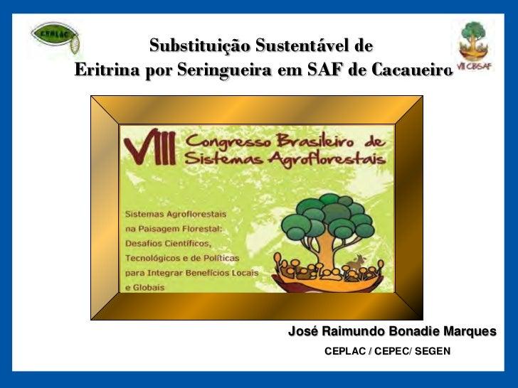 Substituição Sustentável deEritrina por Seringueira em SAF de Cacaueiro                        José Raimundo Bonadie Marqu...