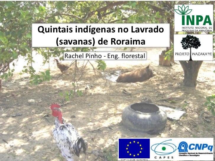Quintais indígenas no Lavrado    (savanas) de Roraima      Rachel Pinho - Eng. florestal