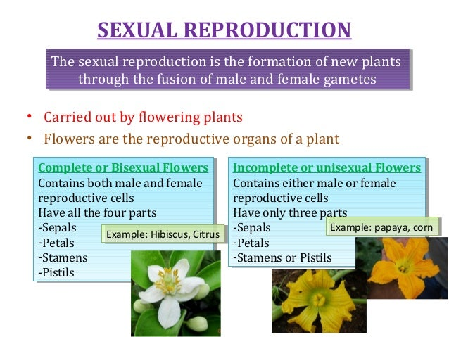 Sexual reproduction in plants class 7