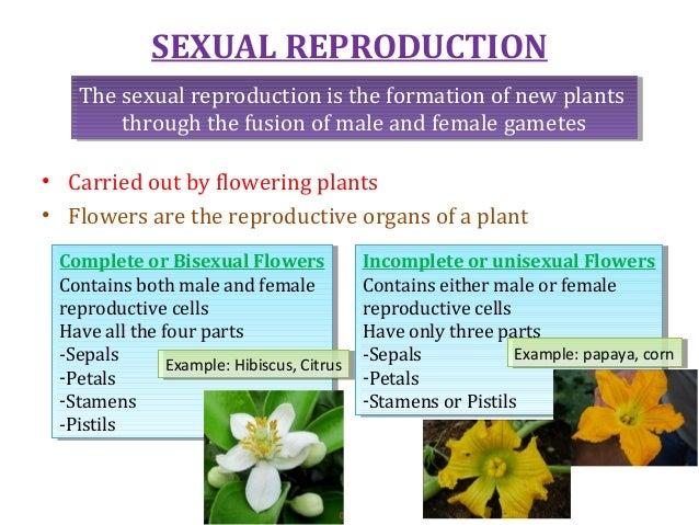 Bisexual flowers examples