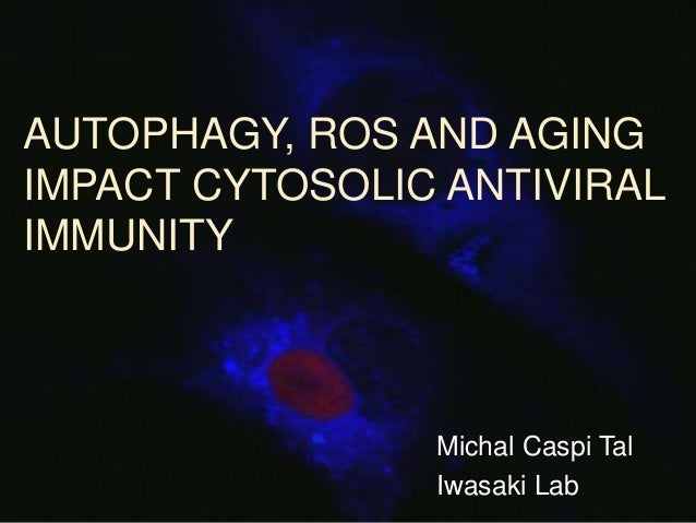 autophagy thesis Iv abstract evaluating the role of prenylation in genotoxin-induced targeted autophagy a thesis presented to the department of biology graduate school of arts and.