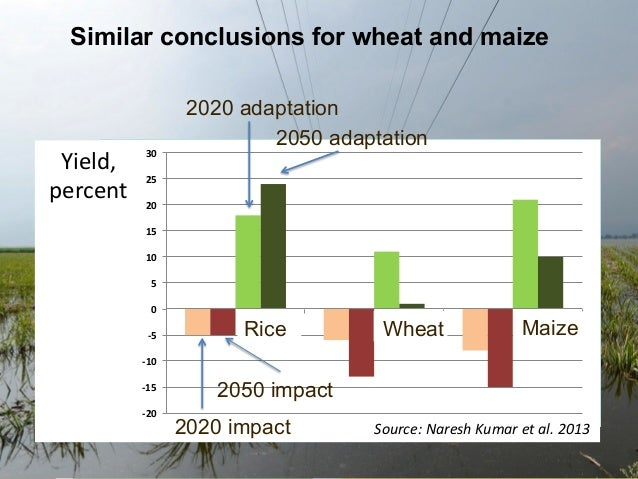 Similar conclusions for wheat and maize  Yield,   Change   percent   in  y  ield,   percent     30    2020...