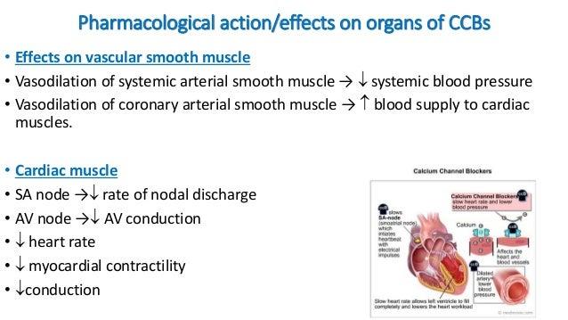 calcium channel blockers mechanism of action