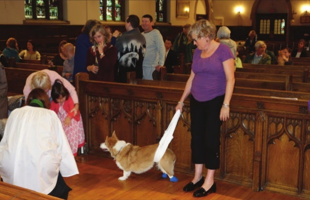CCDP Blessing of Animals 2013