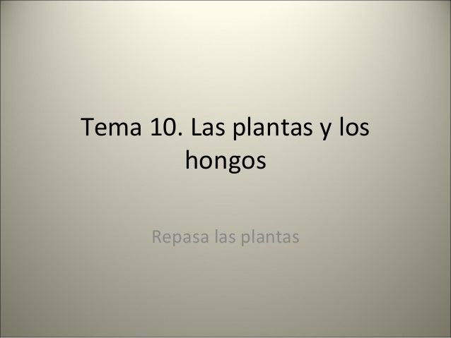Tema 10. Las plantas y los hongos Repasa las plantas
