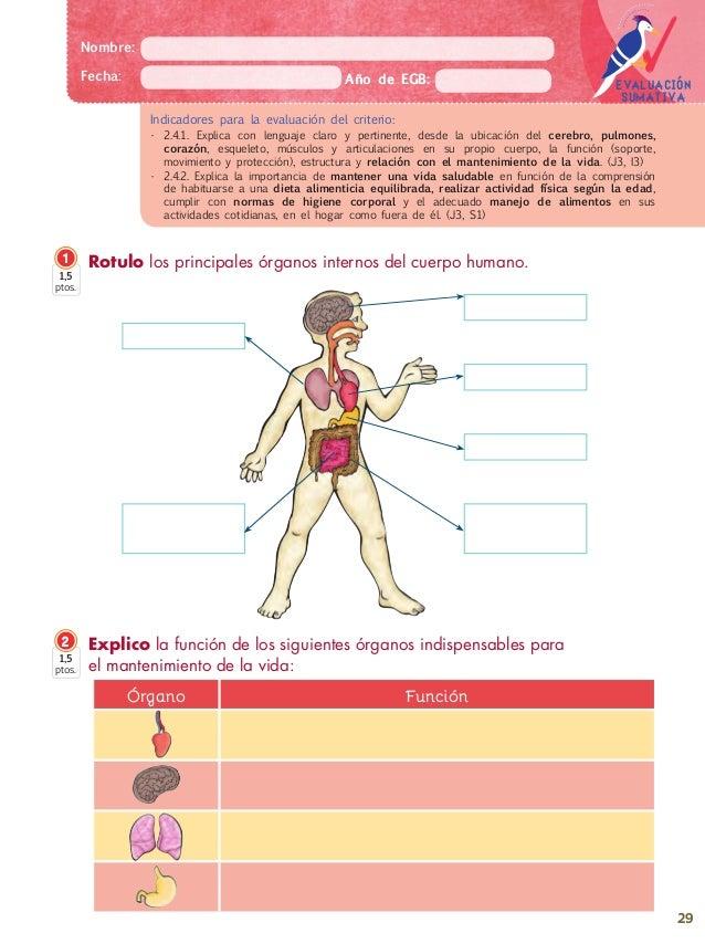 Principales Organos Del Cuerpo Humano Y Su Funcion - Get Yasabe