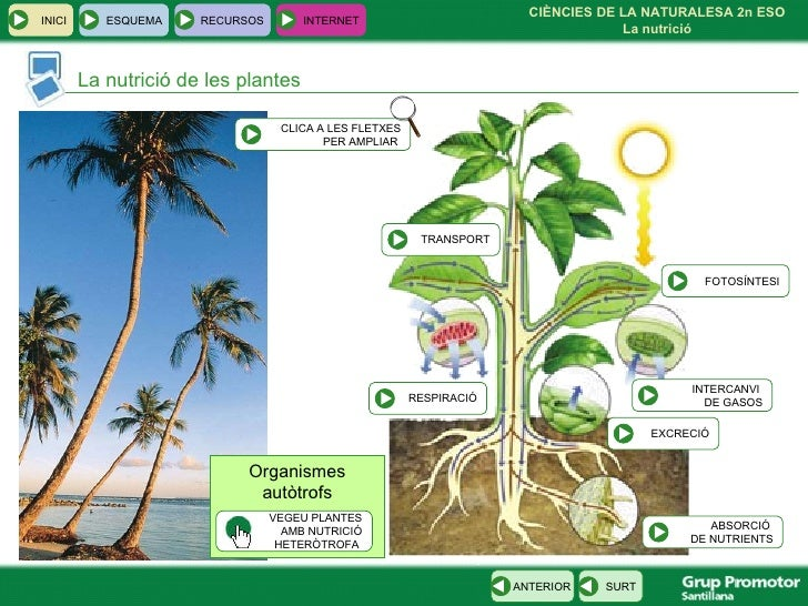 Ccnn2eso cat 002 for Plante carnivore 01