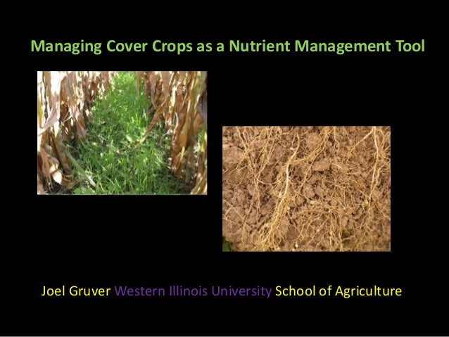 Managing Cover Crops as a Nutrient Management Tool Joel Gruver Western Illinois University School of Agriculture