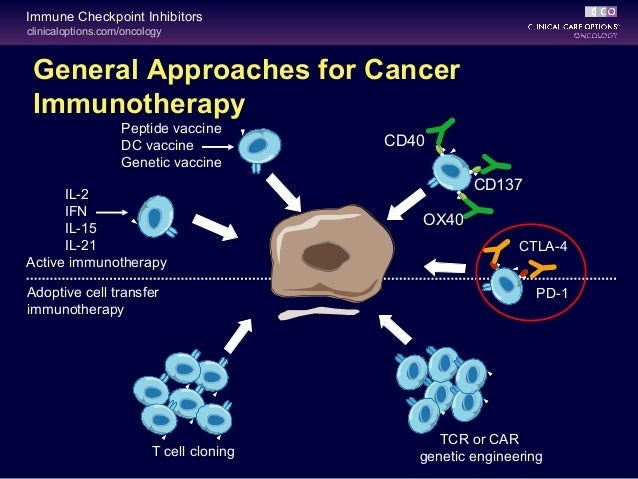 Cco Immune Checkpoint Inhibitors In Cancer Care