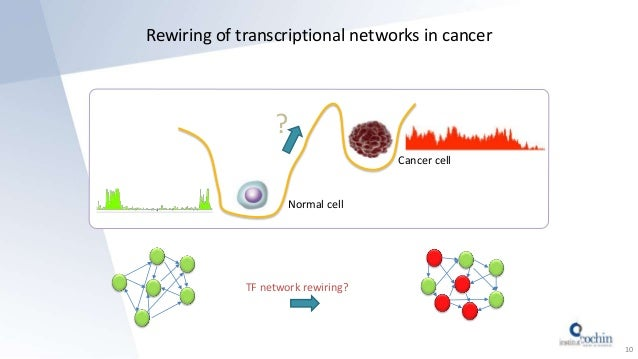 Rewiring of transcriptional networks in cancer 10 Normal cell Cancer cell ? TF network rewiring?
