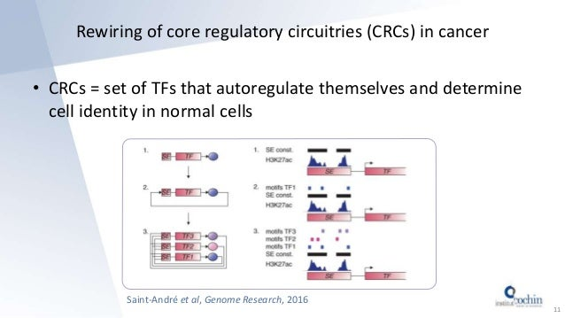 Rewiring of core regulatory circuitries (CRCs) in cancer • CRCs = set of TFs that autoregulate themselves and determine ce...