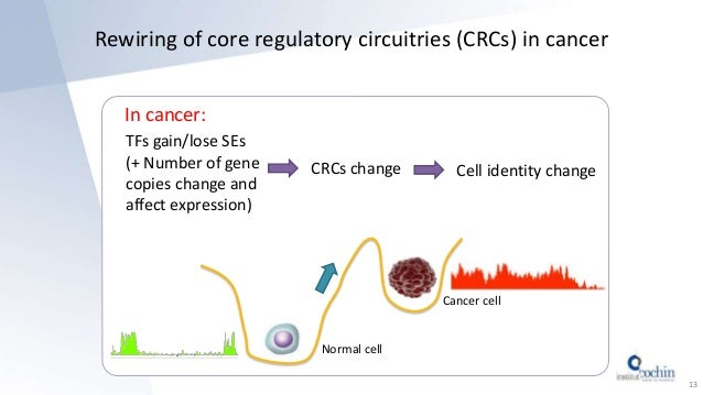 Rewiring of core regulatory circuitries (CRCs) in cancer In cancer: 13 Normal cell Cancer cell TFs gain/lose SEs (+ Number...