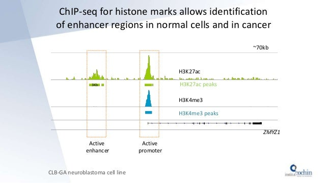 ChIP-seq for histone marks allows identification of enhancer regions in normal cells and in cancer CLB-GA neuroblastoma ce...